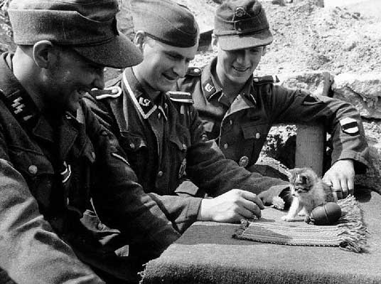 Nazis tormenting helpless kitten